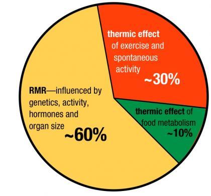 Білки/жири/вуглеводи: що найенергетичніше